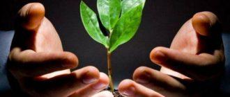 Земля всегда в цене, поэтому инвестирую в неё, можно хорошо заработать