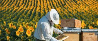 Бизнес в сфере пчеловодства
