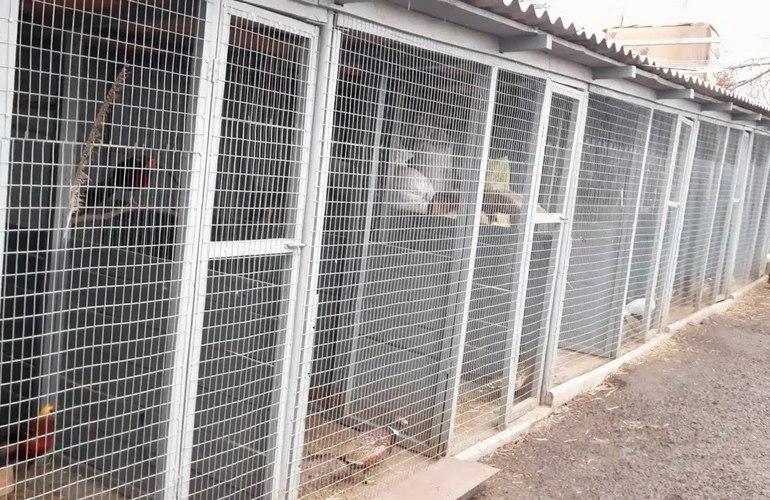 Для содержания фазанов потребуется дополнительное оборудование