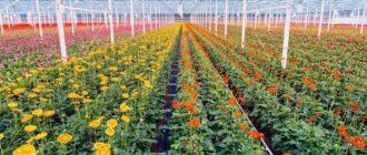 Заработок на цветах