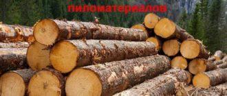 Перед запуском бизнеса переработки дерева необходимо подумать о финансах