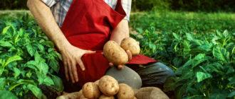 Овощные культуры в целом, как и картофель в частности, несмотря на большую конкуренцию производителей, будут востребованы всегда