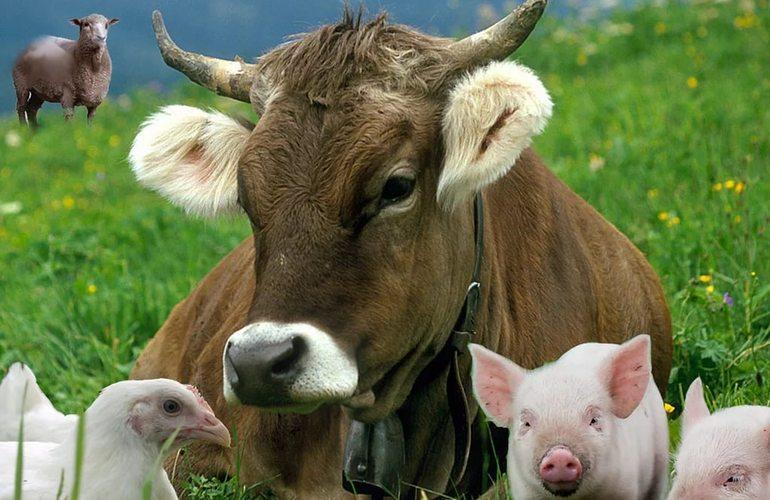 Бизнес в животноводстве считается самым прибыльным делом даже во времена кризиса
