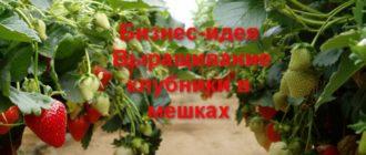 Выращивание клубники в пленочных мешках — наиболее рациональный способ