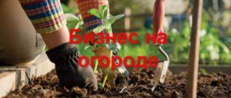 Выбирая продукт для выращивания на огороде, необходимо учесть особенности почвы