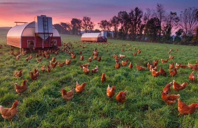 Особо выгодны отрасли фермерства, производящие экологически чистые продукты питания