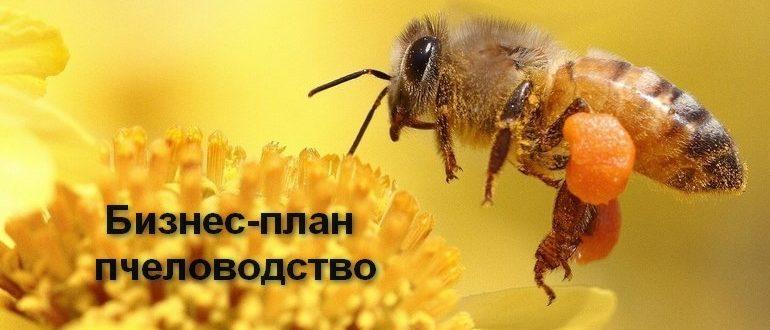 Пчеловодство — перспективная идея для бизнеса