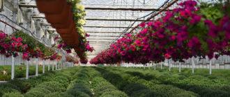 Питомник рекомендуется открывать хотя бы с базовыми знаниями о растениеводстве