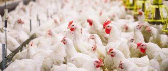 Продукты птицеводства стоят на первом месте в сегменте потребления